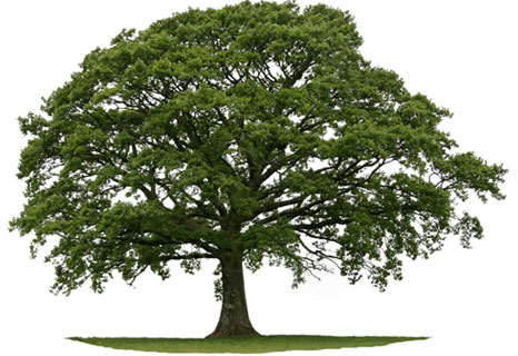 kelleys_tree_care_service.jpg